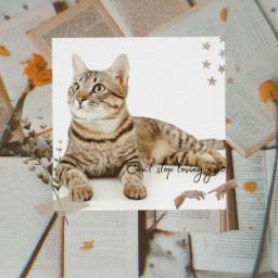 beautifulcat freetoedit