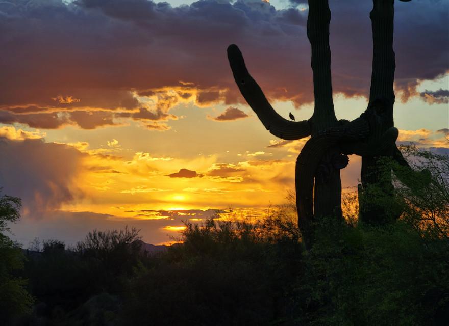 ##sunset