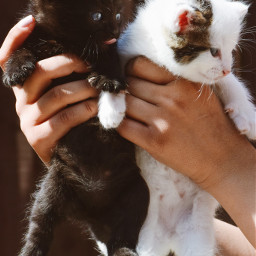 freetoedit kittens