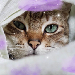 cat aeshetic kitten clouds adorable blankets white purple purpleaesthetic cataesthetic blanketaesthetic frame srcpurpleclouds purpleclouds freetoedit