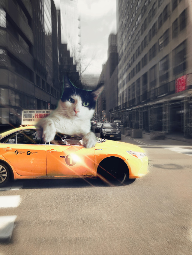 #CatLovers in #town #Taxi @statzone #photographychallenge
