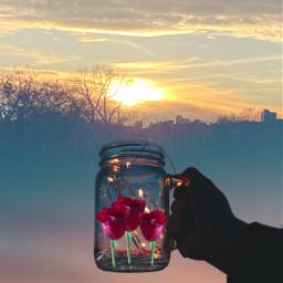 sunshine rosestickers ircmagicfairyjar magicfairyjar freetoedit