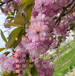 nature pinkflowers maycalendar srcmaycalendar2021 maycalendar2021 freetoedit