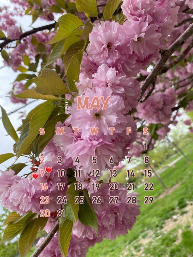 #nature  #pinkflowers #maycalendar 💗🍃🌸 #srcmaycalendar2021 #maycalendar2021 #freetoedit https://picsart.com/i/357574783028201?challenge_id=608c2af7aca48a00aec32beb