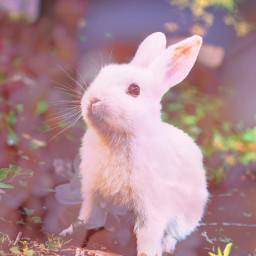 pink flower bunny rabbit rabit cute baby enjoy freetoedit