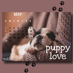 nobbscreative puppy love puppylove cute sweet puppydogeyes puppydog puppycuddles cuteness beautifulpuppy beautifuldog dog cutenessoverload peace calendar may pink friendsforever freetoedit unsplash srcmaycalendar2021
