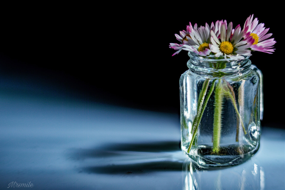 #photography #stilllife #closeup #macro #daisies #flowers #darkmood #blackbackground