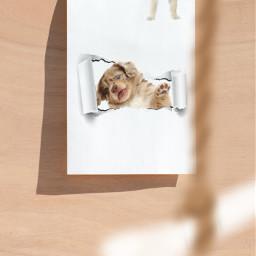 dog doggie doge pup puppie puppy white fluf fluff fluffy flufy cute baby young kid child children enjoy contezt canvas blankcanvas bone treat contest freetoedit irccreateyourownway createyourownway