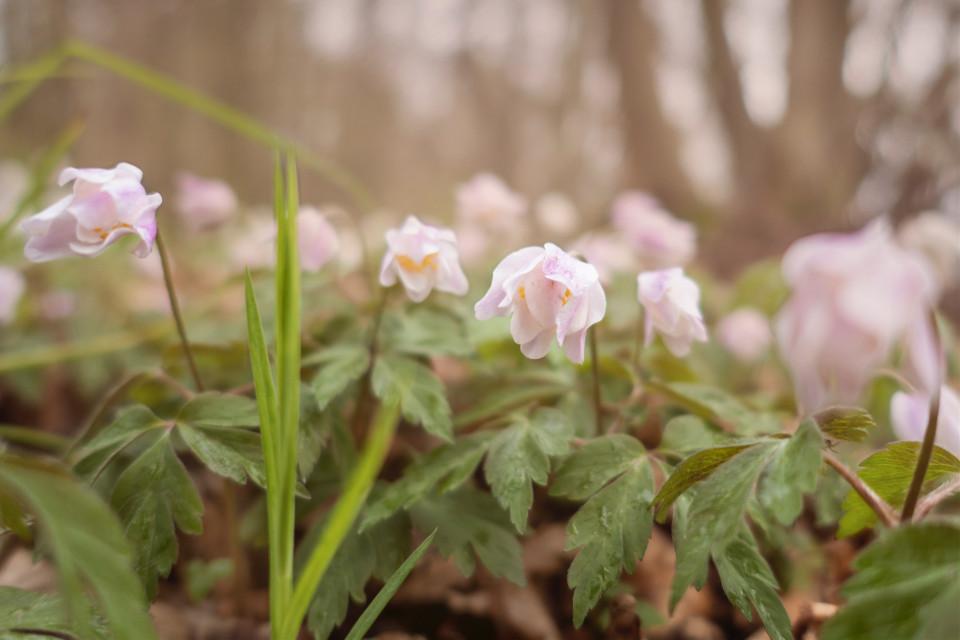 #flowers #meadow #fog #nature