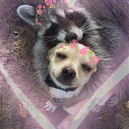 dog animal cuties cute heart love crown flowers adorable freetoedit