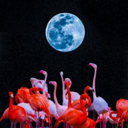 flamingo moon stars shine madewithpicsart aesthetic aestheticedit picsartedit