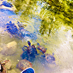 lifepic turtles lifepictures