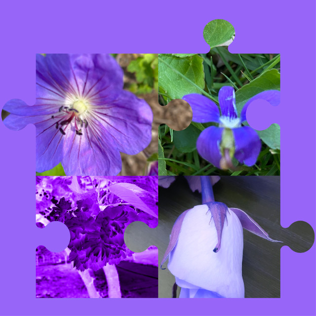 #purples  #collage #natures 💜💜💜💜
