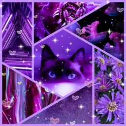purple collage cat flowers flores gato galaxy galaxia hearts corazones freetoedit ccpurpleaesthetic purpleaesthetic