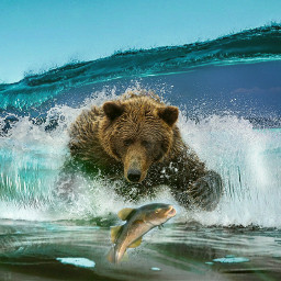 grizzly grizzlybear freetoedit