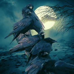 crow rabe
