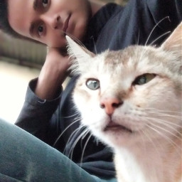 cat india freetoedit