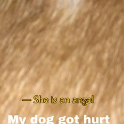 mydoggothurt freetoedit