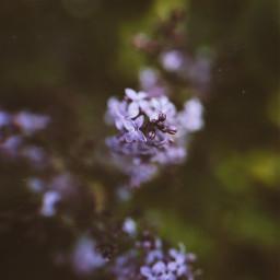 photography spring naturephotography nature colorful outside art purple viral picsart freetoedit