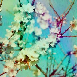 rainbow blossoms freetoedit