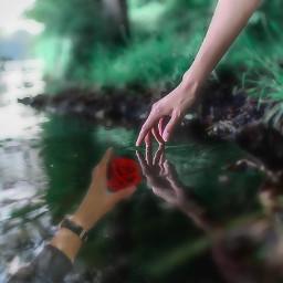 reachinghandsimageremixchallenge lostinlove redrose pond water handsreachingout ircreachinghands reachinghands freetoedit