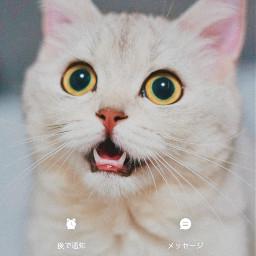 ペット pet 猫 cat petsartpics smartphone call phone 電話 picsart picsartjapan freetoedit