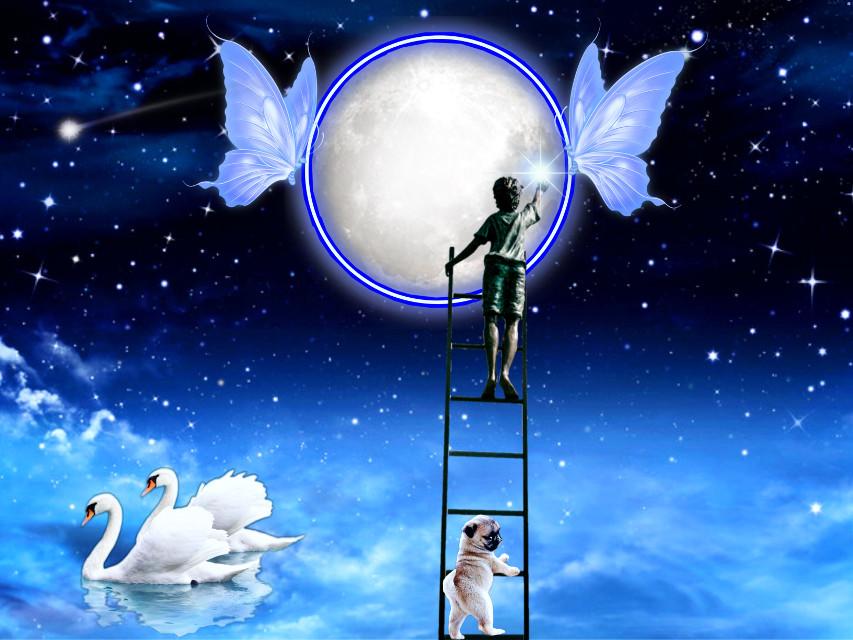 #neonbutterflycirclestickerremixchallenge #moonlightandbutterflies  #butterflies #moon #stars #shootingstar #swans #cutedogs #youngboy #ladder ✨🦋🌝🦢🐶💫✨ #srcneonbutterflycircle #neonbutterflycircle #freetoedit