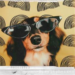 beunique becool crazydog rainbows sunglasses rcdoodlerainbows doodlerainbows freetoedit