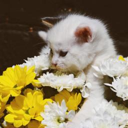 freetoedit flowers