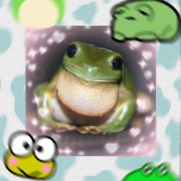 frog wallpaper background cute froggy frogwallpaper cowprint green cutefrogs frogs freetoedit
