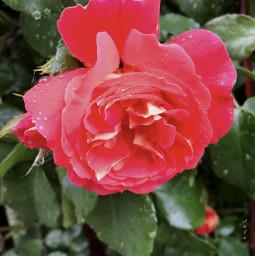 fiore nature