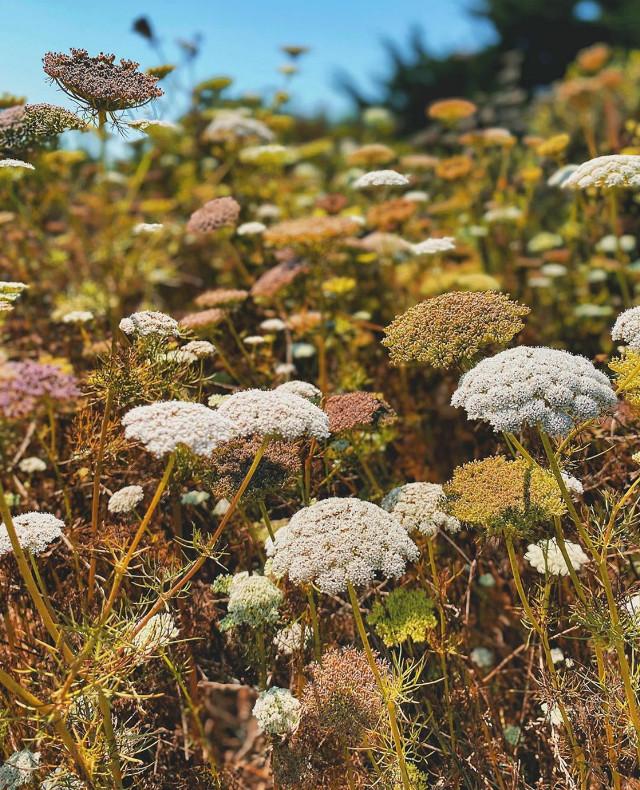#nature #countryside #grassland #flowers #simpleflowers #naturesbeauty #grassflowers #wildflowers #appreciaciateeverysinglemomoment #enjoythesimplethingsinlife #appreciatenaturearoundyou #simplenature #thebeautyofthesimplethings #naturephotography