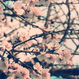 springtime freetoedit