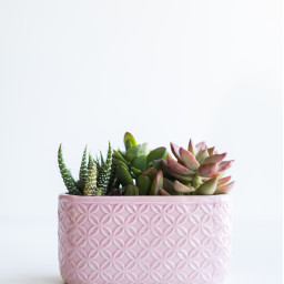 plants freetoedit