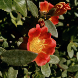 freetoedit photography flowers aditings spreadlove