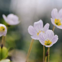 nature wildflowers spring