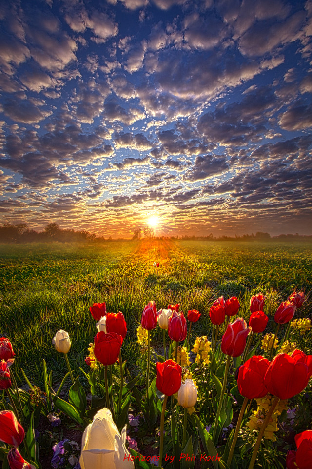 """"""" Grace is the Difference """" - Wisconsin Horizons by Phil Koch. Turning natural landscapes into portraits of nature. #freetoedit #remixit #nature #peace #follow #tulips #spring #flowers #garden #nature #fanart #followme #love #art #beauty"""