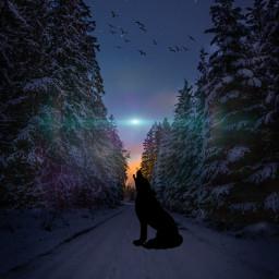 forest lobo nieve solyluna freetoedit modernart