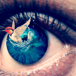 heypicsart makeawessome editedwithpicsart picsart100million myedit eyes eye bird surreal surrealist illusions