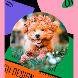 cute dog interesting colorful freetoedit