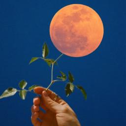 moon flower surreal 月 花 picsart picsartjapan freetoedit