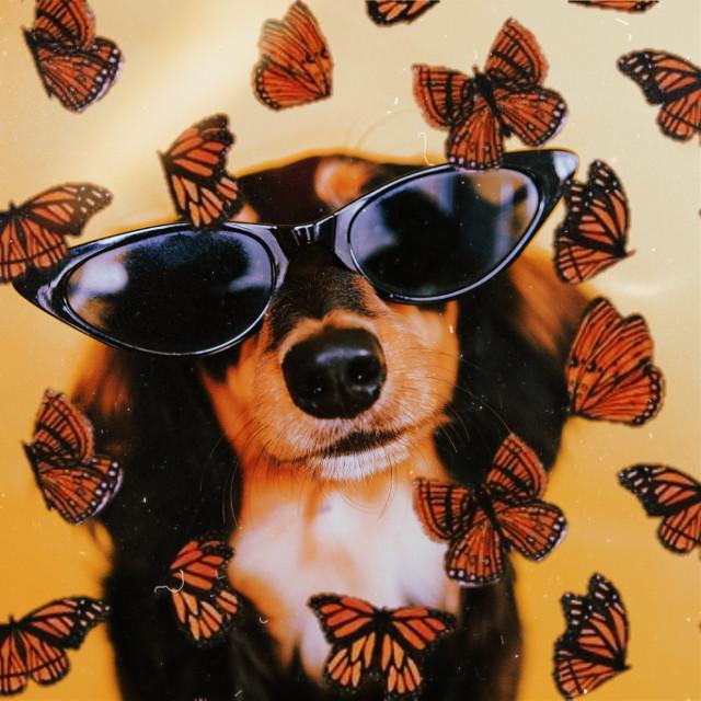 #dog #butterfly #sosweet #sweet #heypicsart