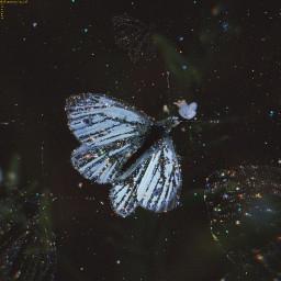 freetoedit butterfly freedom fly unsplash