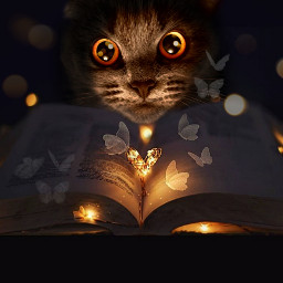 mycat cats myart madewithpicsart dream fantasy lovecat scotishfold freetoedit