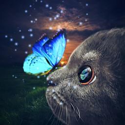 mycat scotishfold myedit dream fantasy madewithpicsart art artwork зайка cat cats freetoedit