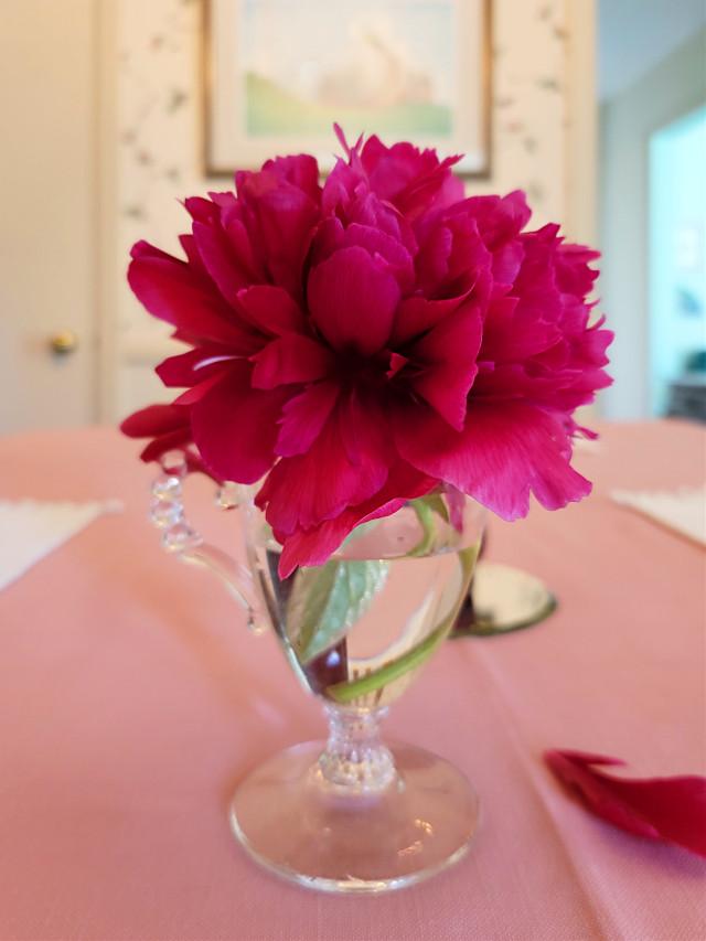 Vibrant nature 💕  #peony #pink #fuchsia #flower #vase #beauty #photography #myphoto #freetoedit