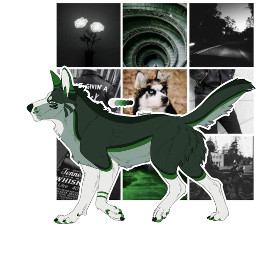 notmybase custom moodboard dog husky
