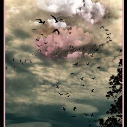 art photography skylovers cloudsandsky cloudscape beauty photographylife artist danalakat freetoedit