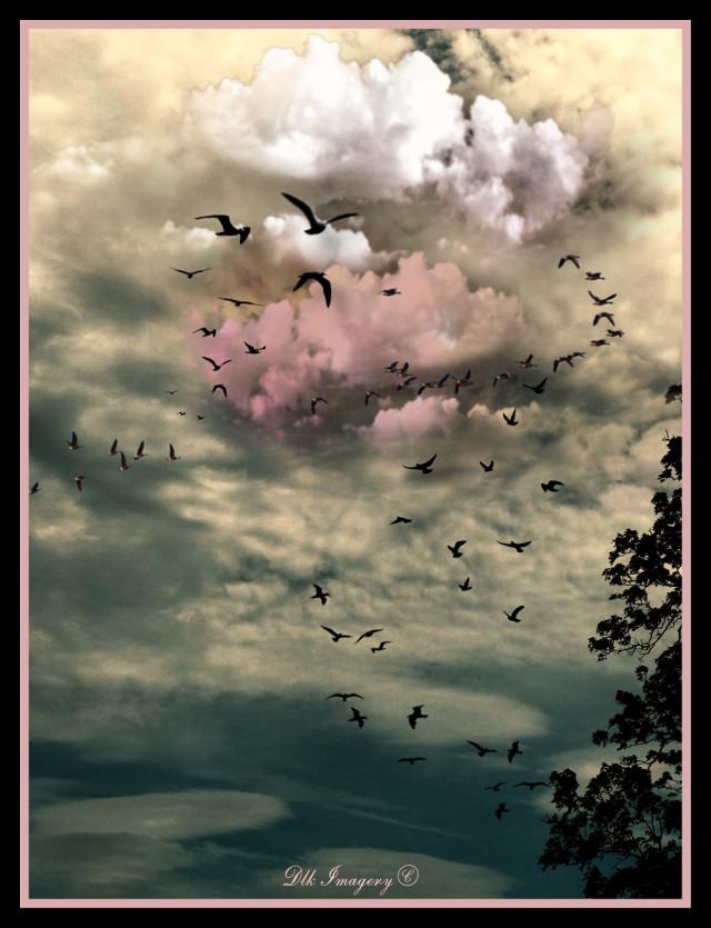 Fly away #art #photography #skylovers #cloudsandsky #cloudscape #beauty #photographylife #artist #danalakat