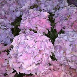 myownphotography flowers